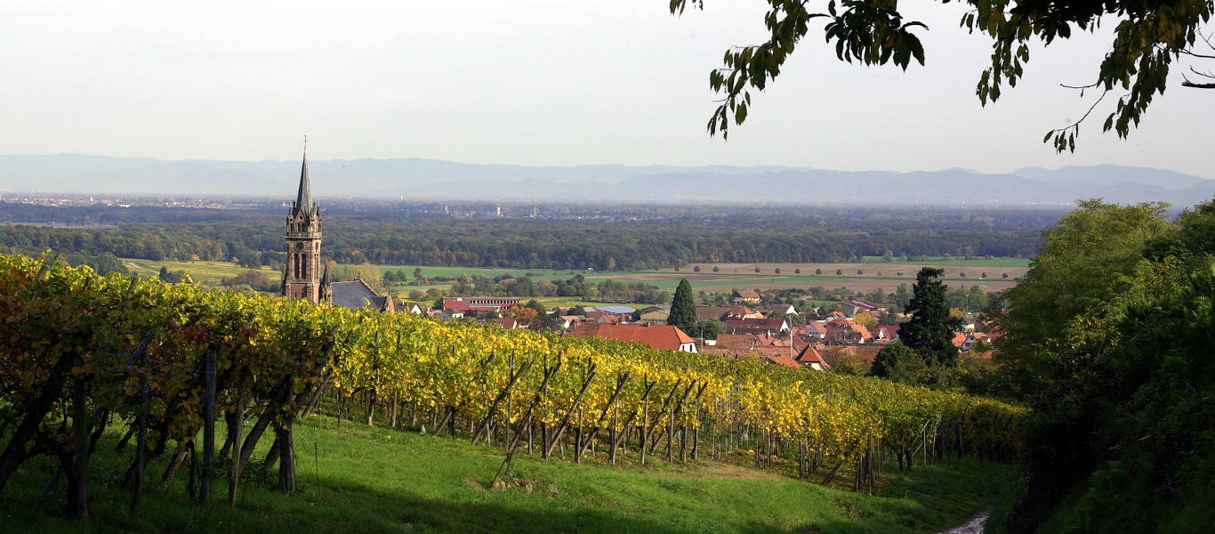 winegrowing view in Alsace
